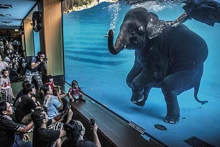 Zoobesucher beobachten einen jungen Elefanten, der in Australien unter Wasser spielt. Adam Oswel gewinnt den Wildlife Photographer of the Year Award 2021 in der Kategorie Fotojournalismus. Foto: Adam Oswel//Wildlife Photographer of the Year/PA Media /dpa