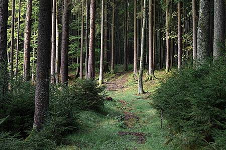 Ein achtjähriges Mädchen aus Berlin hat sich im Wald an der deutsch-tschechischen Grenze verirrt. Foto: Daniel Vogl/dpa