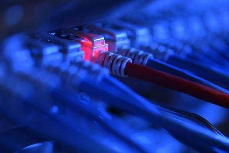 Ein Netzwerk-Kabelstecker in der Netzwerkzentrale einer Firma. Foto: Felix Kästle/dpa