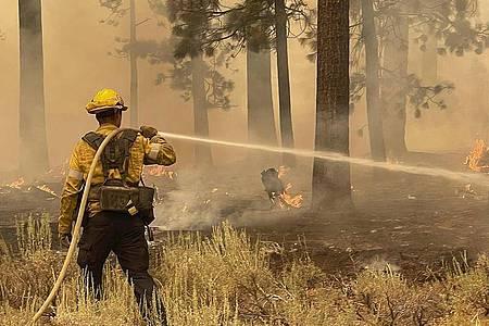 Ein Feuerwehrmann aus Los Angeles County benutzt einen Schlauch, um die Flammen des Caldor-Feuers zu löschen. Foto: Elias Funez/The Union via AP/dpa