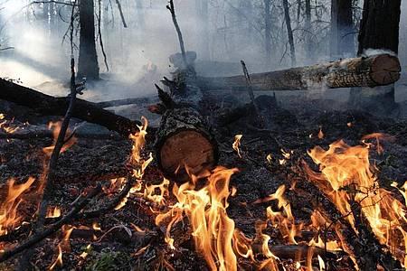 Waldbrand im August im Gebiet Gorny Ulus (Jakutien). Foto: Valeriy Melnikov/Sputnik/dpa