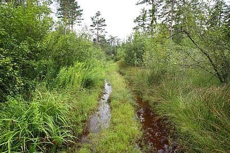 Ein vom Regen überschwemmter Waldweg im Degermoos. Das Moor im Allgäu an der Grenze von Baden-Württemberg und Bayern wurde über Jahrzehnte immer weiter ausgetrocknet. Foto: Karl-Josef Hildenbrand/dpa
