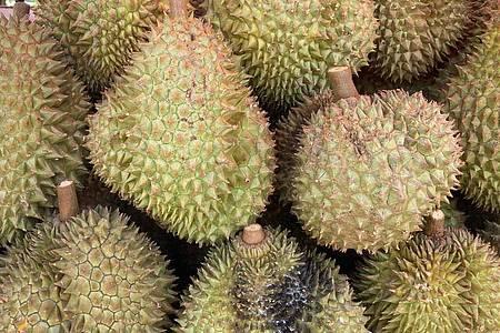 Die Durian gilt als Königin unter den Früchten. Aber sie riecht wie ein Mix aus Klohäuschen und Sportsocke. Foto: Carola Frentzen/dpa