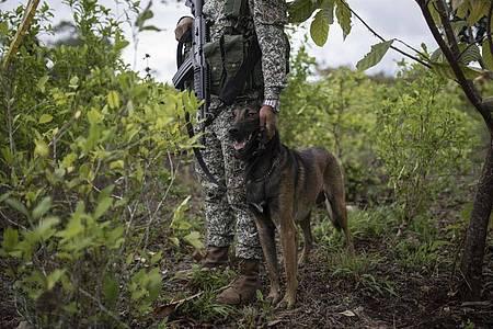 Ein Soldat der kolumbianischen Armee. Symbolbild. Foto: Ivan Valencia/AP/dpa