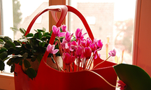 Korb mit verschiedenen Pflanzen