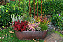 Verschiedene Blumensorten in einm Kübel