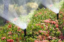 Blumen die bewässern werden