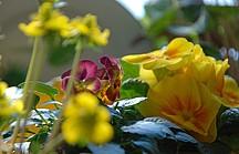 Bunte Frühlingsblumen auf der Fensterbank