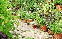 Kübelpflanze, Töpfe, Terrasse