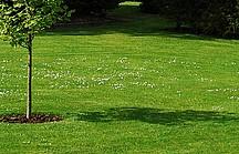 Garten mit großer Rasenfläche