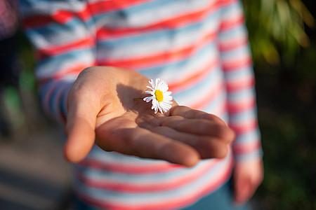 Kind hält Gänseblümchen