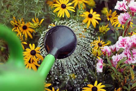Grüne Gießkanne die Blumen gießt