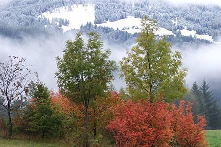 Grüne Bäume im Vordergrund, Berge im Schnee mit Hintergrund