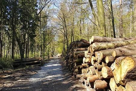 Wald mit Holzstämmen