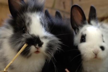 Kaninchen-Babys