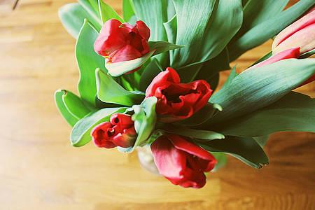 Tulpen Strauss